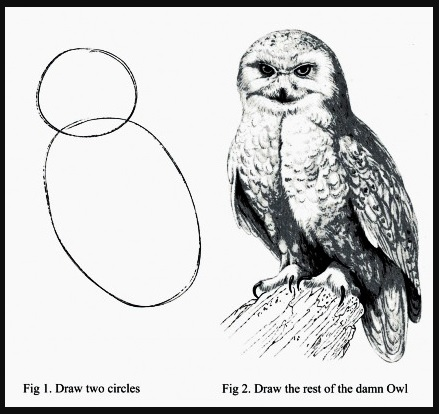 draw an owl in two steps